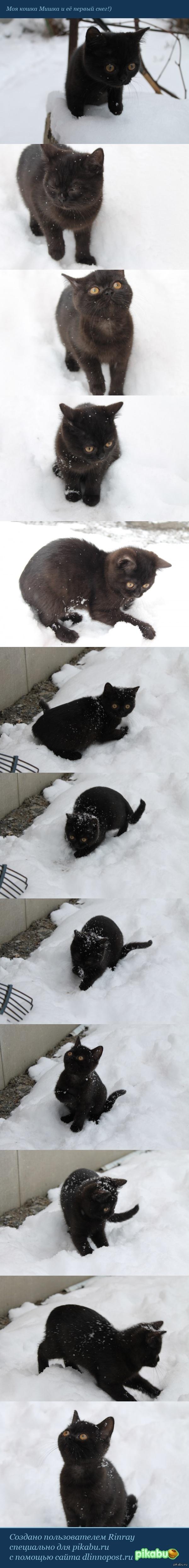 Мишка и снег :) Фотографии ноября 2012 года. Выпустила кошку во двор после первого снегопада, дабы увидеть ее реакцию))