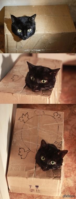 Тот самый момент,когда твоя коробка стала котом свершилось чудо!
