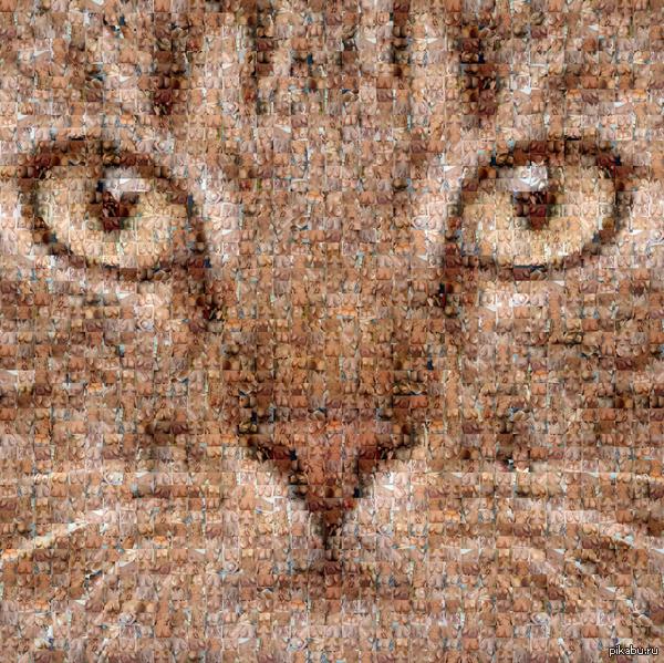 Всех с пятницей :3 особенно любителей котиков и женских прелестей *_* Мой первый пост =^_^=   Отличный сайт