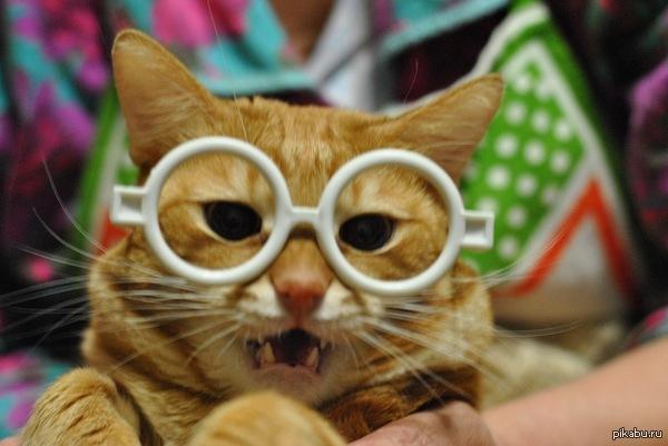 Кот ученый Наш котик Федя. К сожалению уже давно умер, но оставил память о себе в формате вот таких фотографий.
