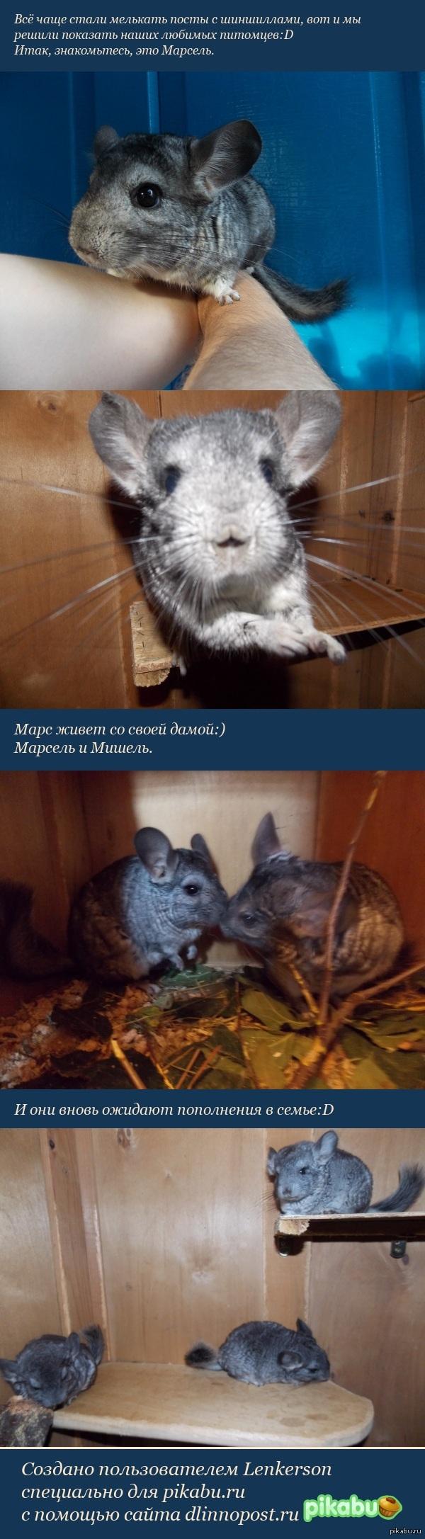Почти как мини-коты:D