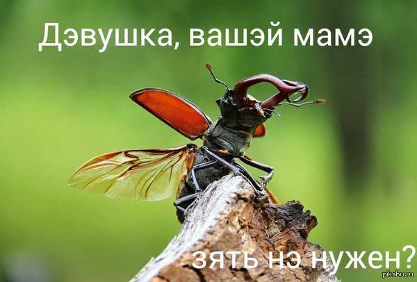"""За секунду до В ответ на пост <a href=""""http://pikabu.ru/story/quotda_nu_nakher_ya_otsyuda_svalivayuquot_2720046"""">http://pikabu.ru/story/_2720046</a>"""