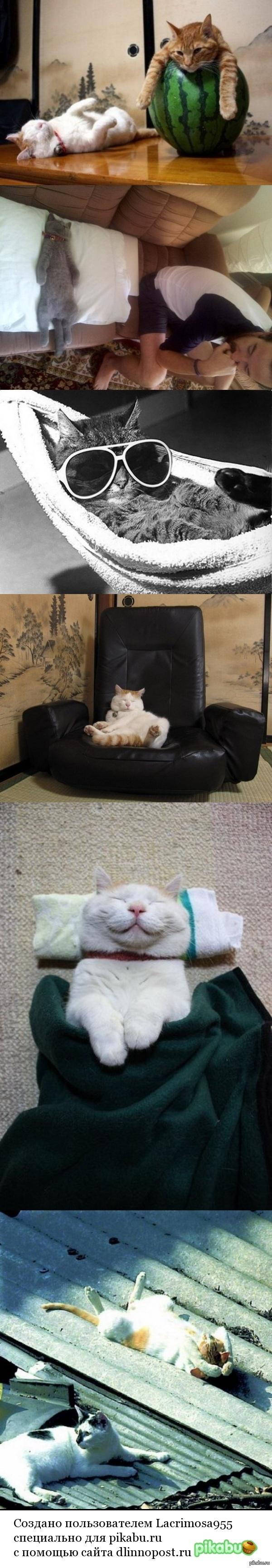 В разгаре рабочей недели жалею, что я не кот(