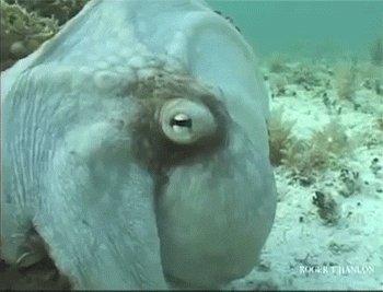 Подводный страшила
