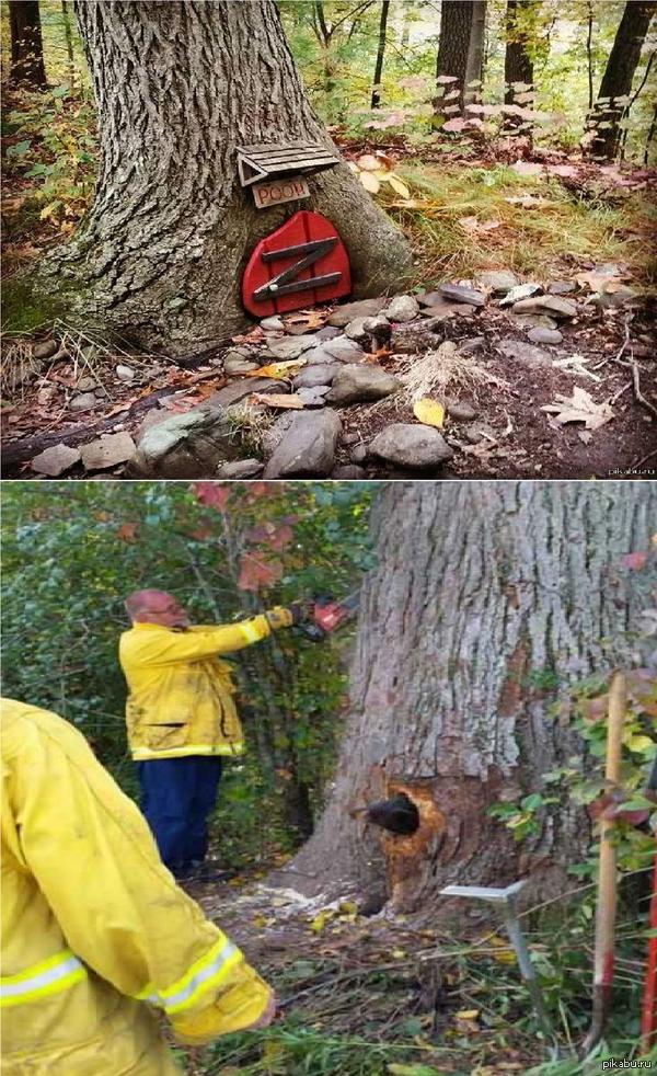 У медведей проблемы с дуплами Насмотревшись мультов и постов на Пикабу, медведи решили проверить легенду о застрявшем Пухе. В этот раз дом кролика пришлось разобрать))