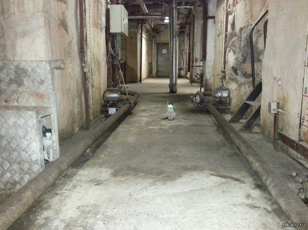 Заводские котейки.. обычно их в районе 5/10 а тут только двое на разведке.