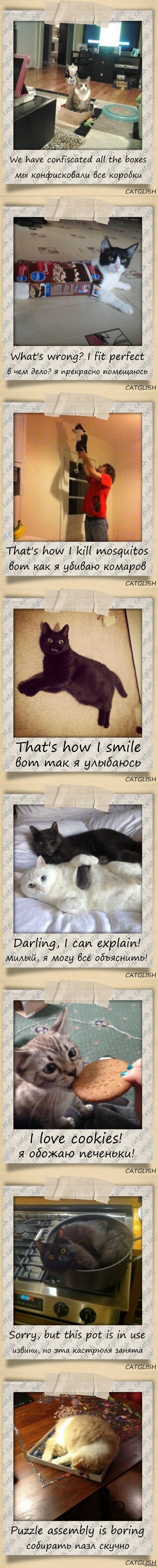 Catglish - английский с котиками