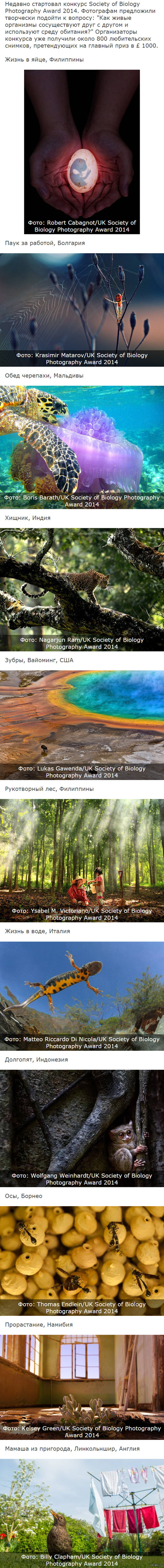 Фотоконкурс Society of Biology Photography Award 2014