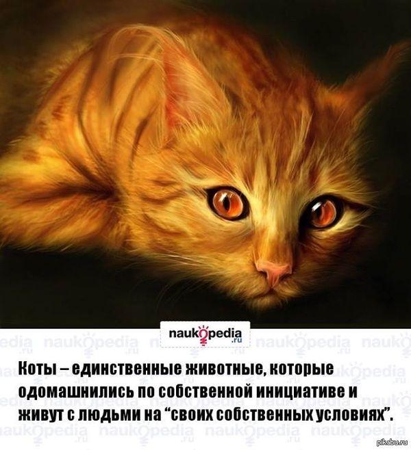 Любителям кошек Хочу купить себе котенка, только что бы по меньше линял, и с которым точно будет весело, кто что посоветует?