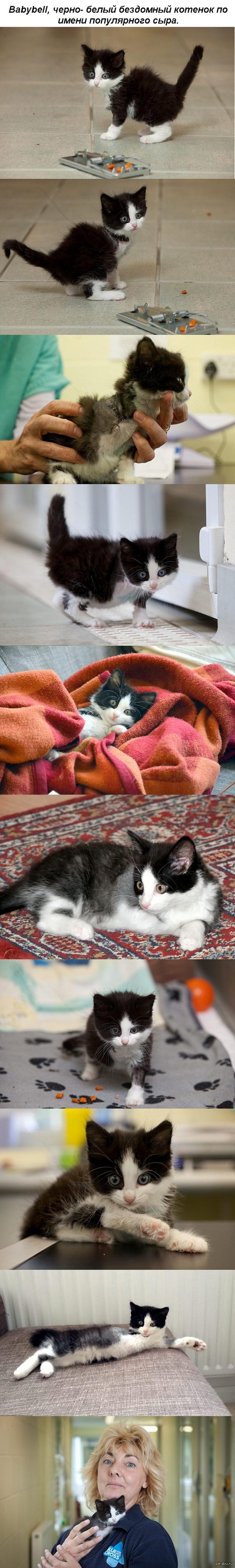 Котенок, который потерял лапку в мышеловке, но обрел любящих хозяев Любопытство чуть не убило котенка: ему ампутировали лапку после попадания в мышеловку - и спасло его только то ,что прохожий услышал мяуканье.