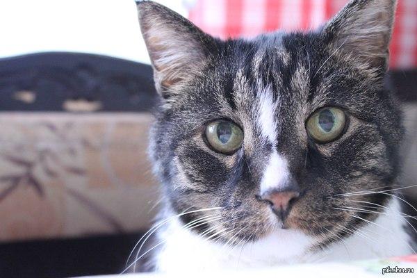 Кот, который вот... Спокойного сна. Вчера, на 19-м году жизни, покинул нас наш Мурзик. И спасибо хирургу, который согласился оперировать такого безнадежного пациента. Умер на операционном столе.