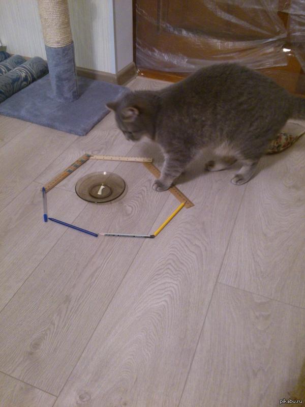 Ловушка для кота