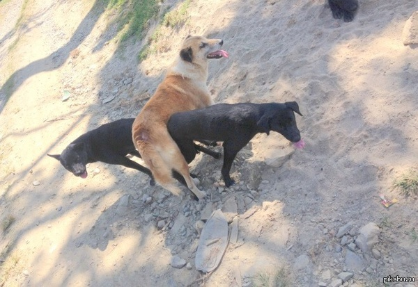 Что не так  с этими собаками?