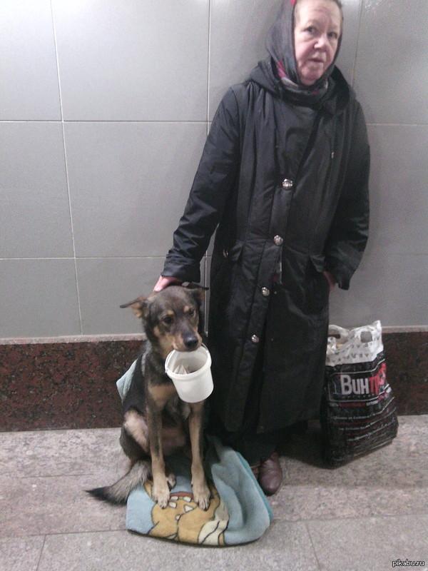 собакен и бабуля. вот такая парочка иногда стоит у нас на Славянском бульваре в подземном переходе (г.Москва),собака всегда держит в зубах ведерко для денег.