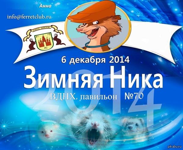 Выставка хорьков в Москве Может кому будет интересно, вход для посетителей бесплатный.