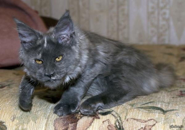 Тут котов любят я вижу... Знакомьтесь,это Жора!