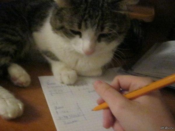 Кот сочуствует мне:( Сидел делал физику,а он пришел и такими глазами на меня смотрел как-будто сам это все учил и проходил и знает какого это...