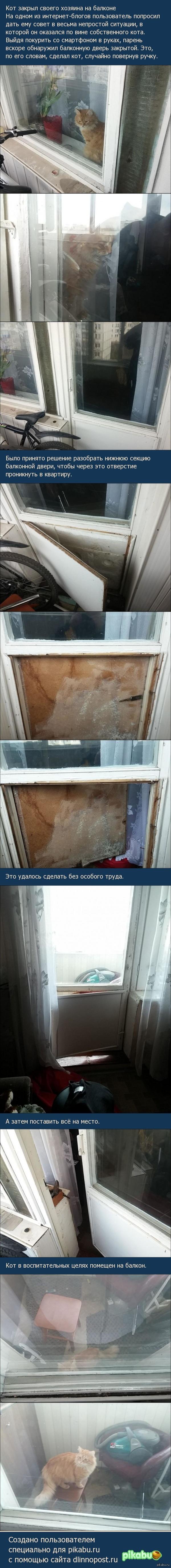 Кот закрыл своего хозяина на балконе
