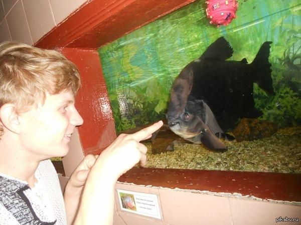 Неунывающая рыба Сфотографировала подруга в Николаевском зоопарке