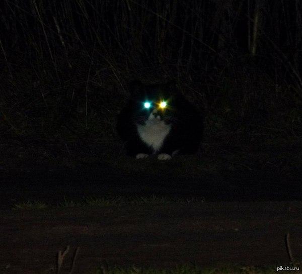Они следят за нами!