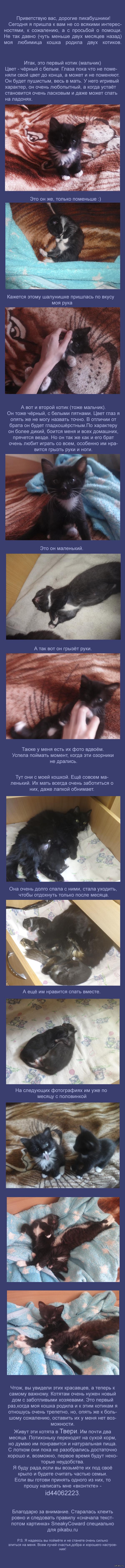 Новый дом для котиков