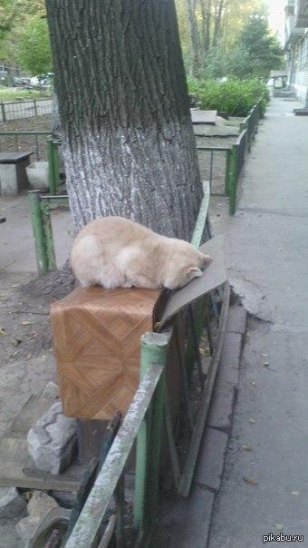 Не только у тебя депрессия..( А тем временем днепропетровские коты