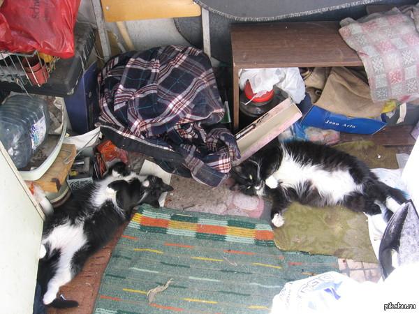 Мама и ее котенок (многими месяцами позже..)