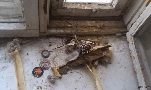 Неожиданная находка Когда заклеивал окна, то обнаружил между окон такой сюрприз. Пустил слезу от находки - прочистил салфеткой и положил на полку, как напоминание былого.