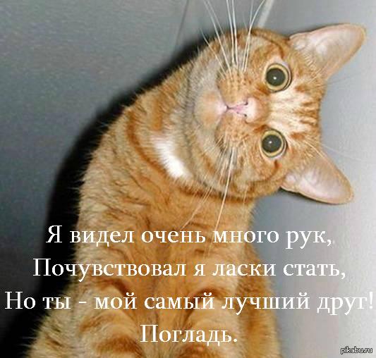 Коты...