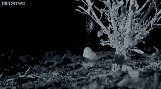 Паук тащит ракушку наверх, чтобы сделать себе домик Осторожно, длинногиф