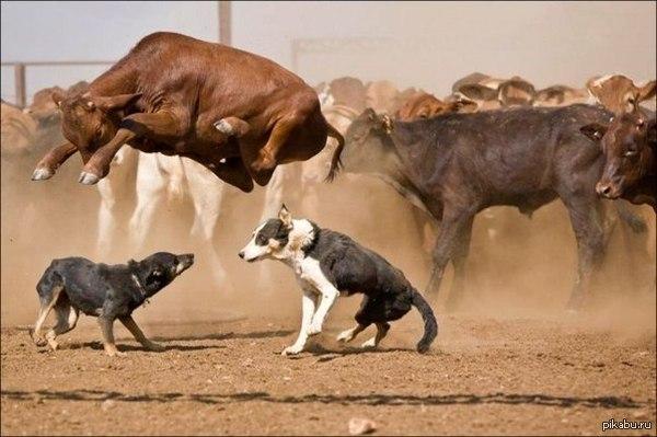Гравитация бессильна, когда на тебя нападают собаки