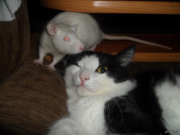 """""""тут же любят котиков"""""""