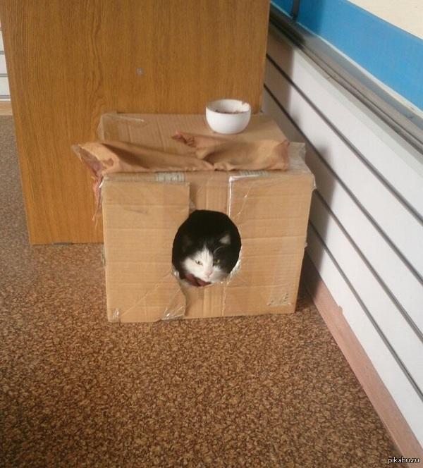 """Правильный кот Вот такое спальное место. Отец """"старался"""", вырезал. :)"""