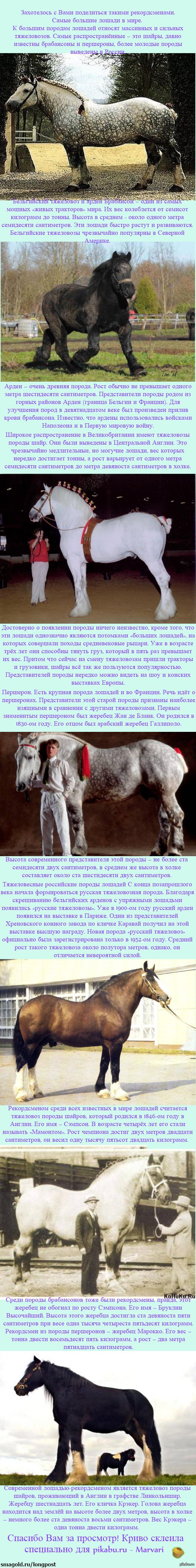 Лошади - рекордсмены!