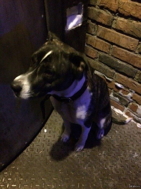 Найдена собака в Барнауле, ищем старого или нового хозяина Найдена собака в Барнауле. Девочка, ухоженная, с ошейником. Ищем хозяина или отдадим в добрые руки, себе взять не можем :( 89132629264, https://vk.com/4manowar
