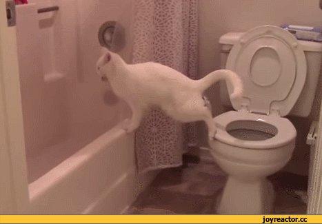 Чудеса акробатики котик очень удивлен )