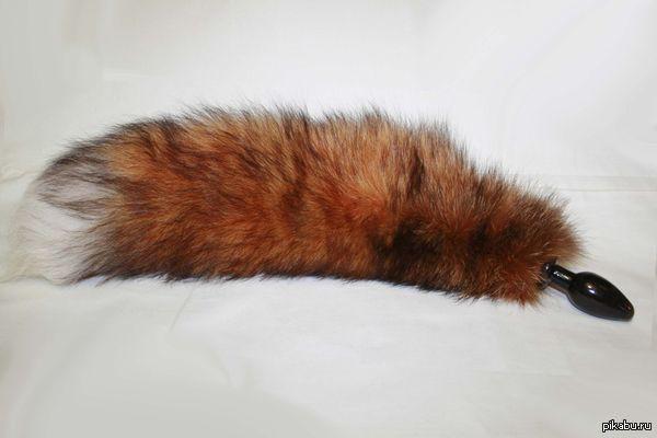 """А вот так выглядит хвост лисицы. В продолжении поста <a href=""""http://pikabu.ru/story/a_vot_tak_vyiglyadit_khvost_bobra_2881479"""">http://pikabu.ru/story/_2881479</a>"""