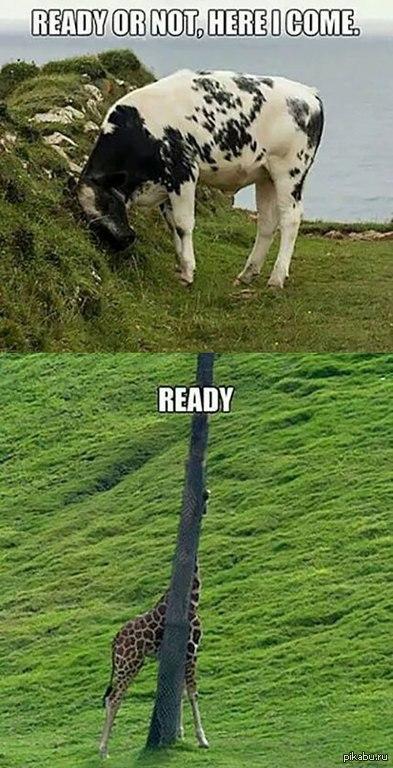 Готов или нет? Перевод: - Готов или нет? Я иду! - Готов!