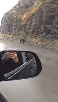 Быстрый медведь