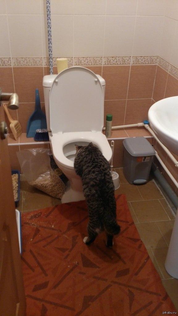 Сонник упасть в туалет