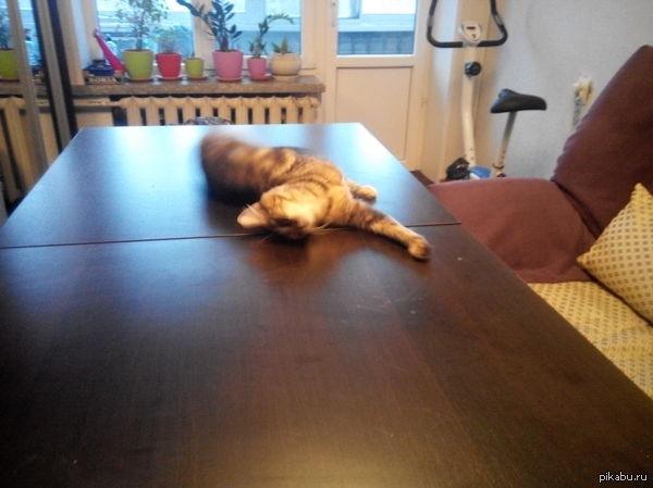 Помощница Раскрыла стол, а он грязный пипец. Протерла тряпкой, пошла за губкой, и что я увидела по возвращении...