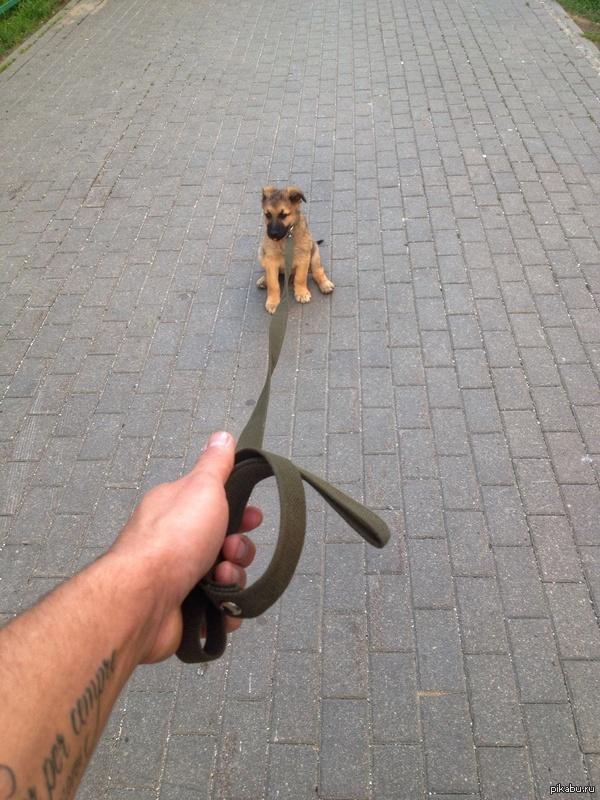 Первая прогулка Мой бродяга, подобранный на улице. Фото июль 2014