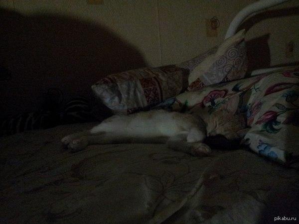 просто маленькая наглая котейка которая жила с нами неделю в общаге :3