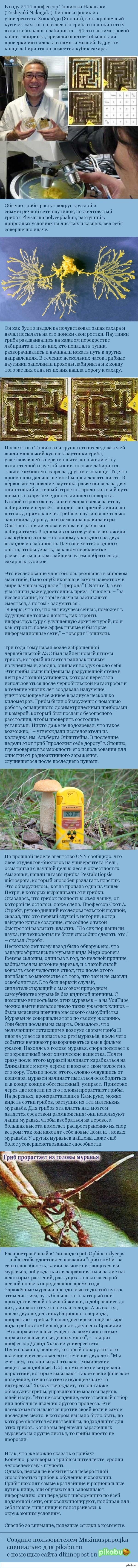 Разум грибов Примитивный, но удивительный