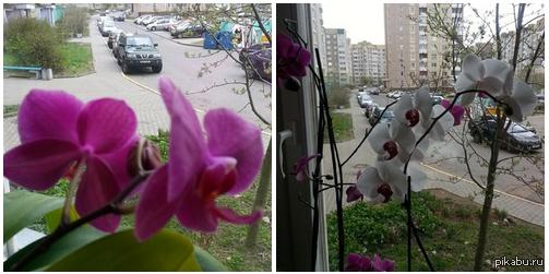 ЛД: Помогите опознать Минский двор по фото. Очень надо, хочу девушке сюрприз сделать, а он мне только 2 фотки из своего окна прислала. Беларусь, Минск, предположительно Шаранговича или окресности.