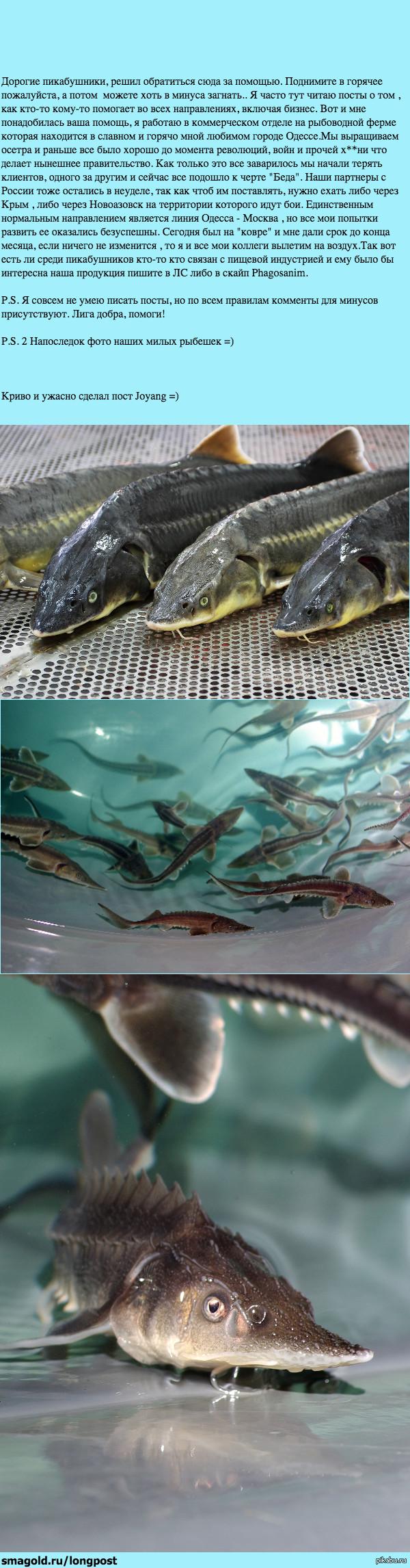 Длиннопост о рыбке и суровых буднях коммерции.
