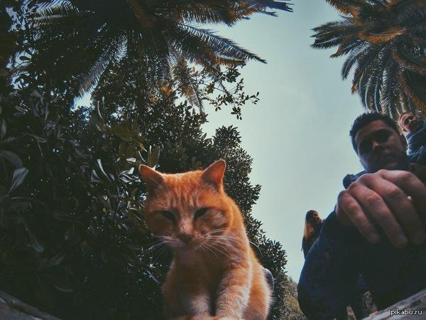 Сочи. Новый Год. Кот