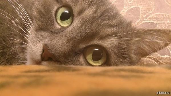 Кошка Масяня