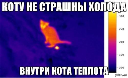Коту не страшны холода
