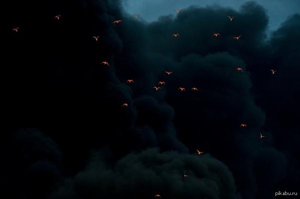 Огонь отражается от птиц в дыму.